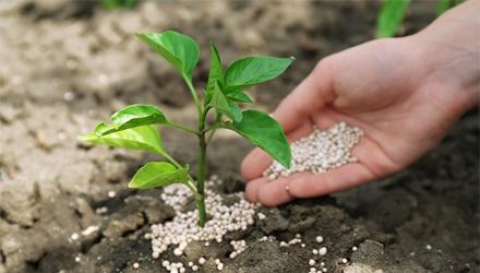 ácidos orgánicos Huma Gro