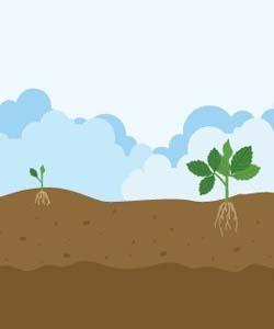 Hortícola inicio vegetativo 1