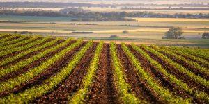 Auxinas: qué son y cómo actúan en las plantas