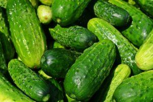 importancia del riego para cultivo de pepino en invernadero